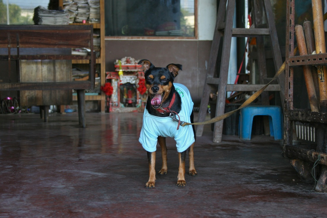Cute dog in Hua Hin